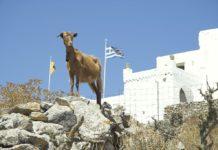 cabras en Grecia