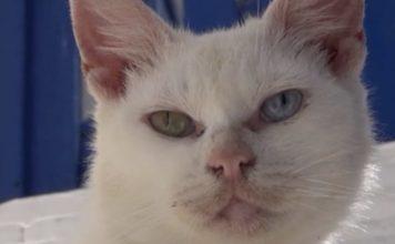 gato Mykonos